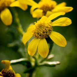 A yellow flower with pollen.