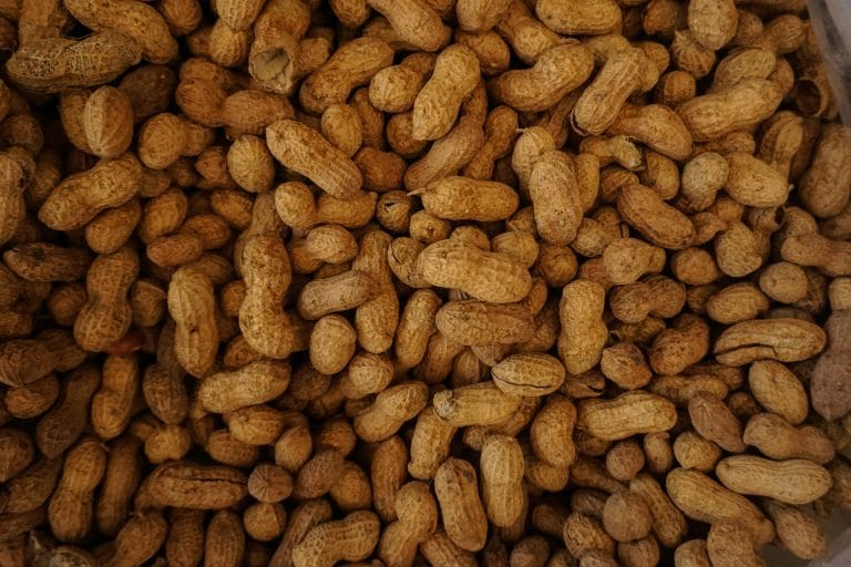Peanuts, a common food allergy.